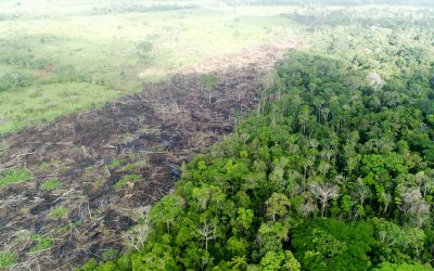 Allarme Amazzonia: rilascia più CO2 di quanta ne assorba