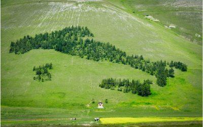 Mezzo milione di ettari in più: i boschi italiani crescono (e la CO2 diminuisce)